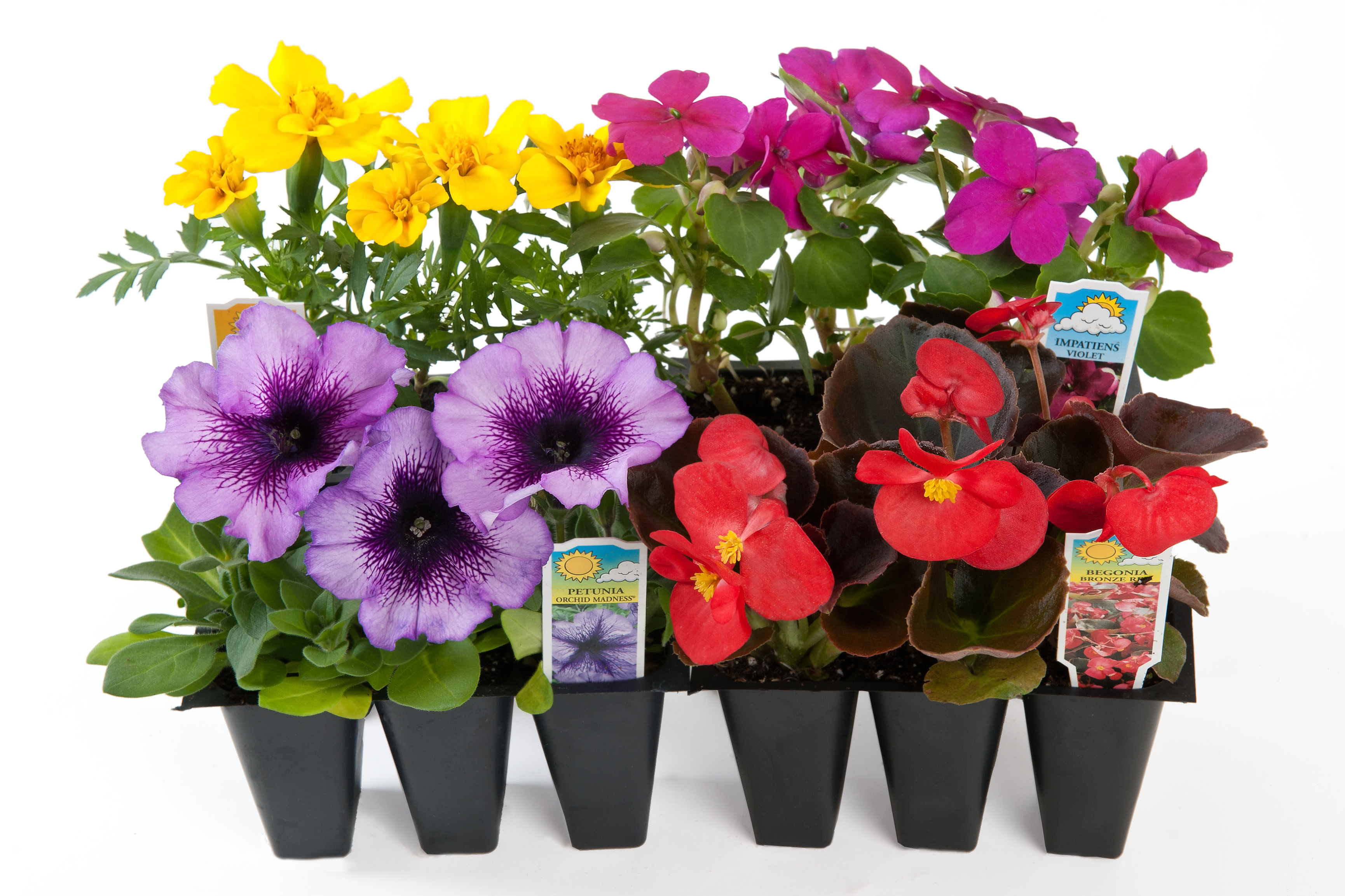1803 Bedding Plants Wholesale Bedding Plants Hybels Inc