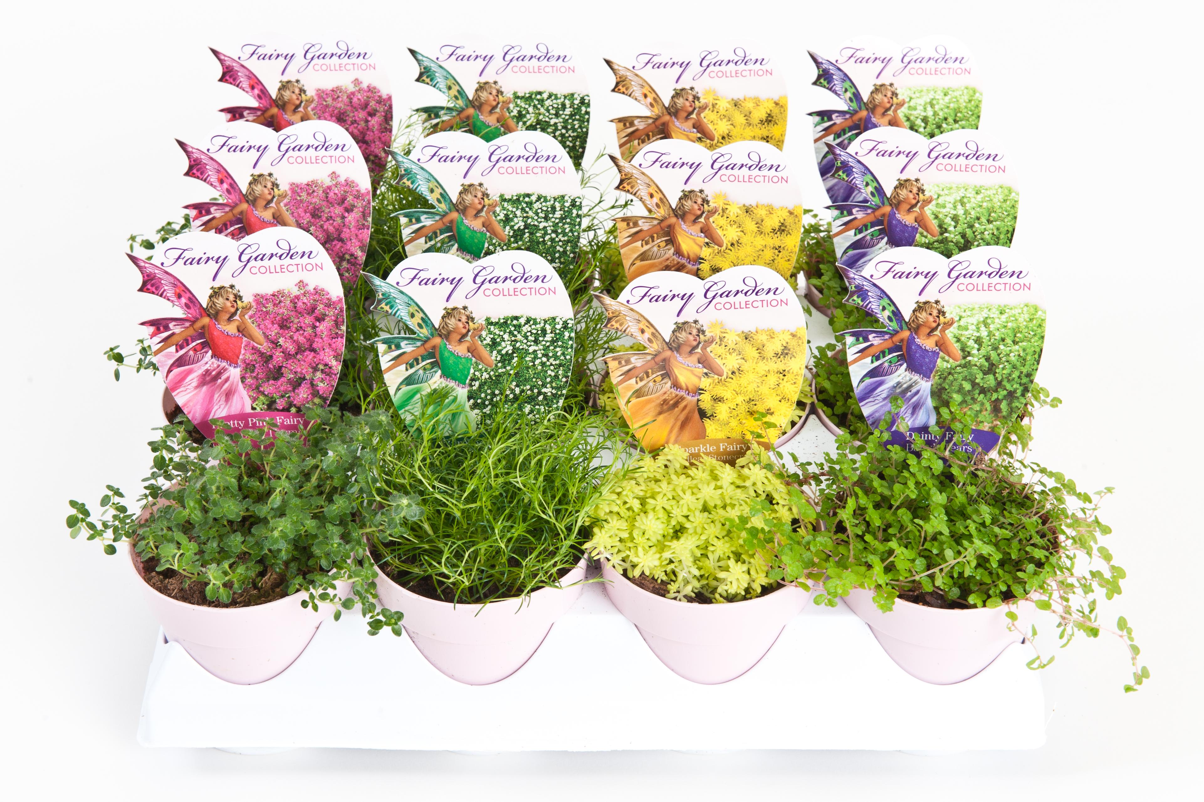 download high resolution image - Fairy Garden Plants