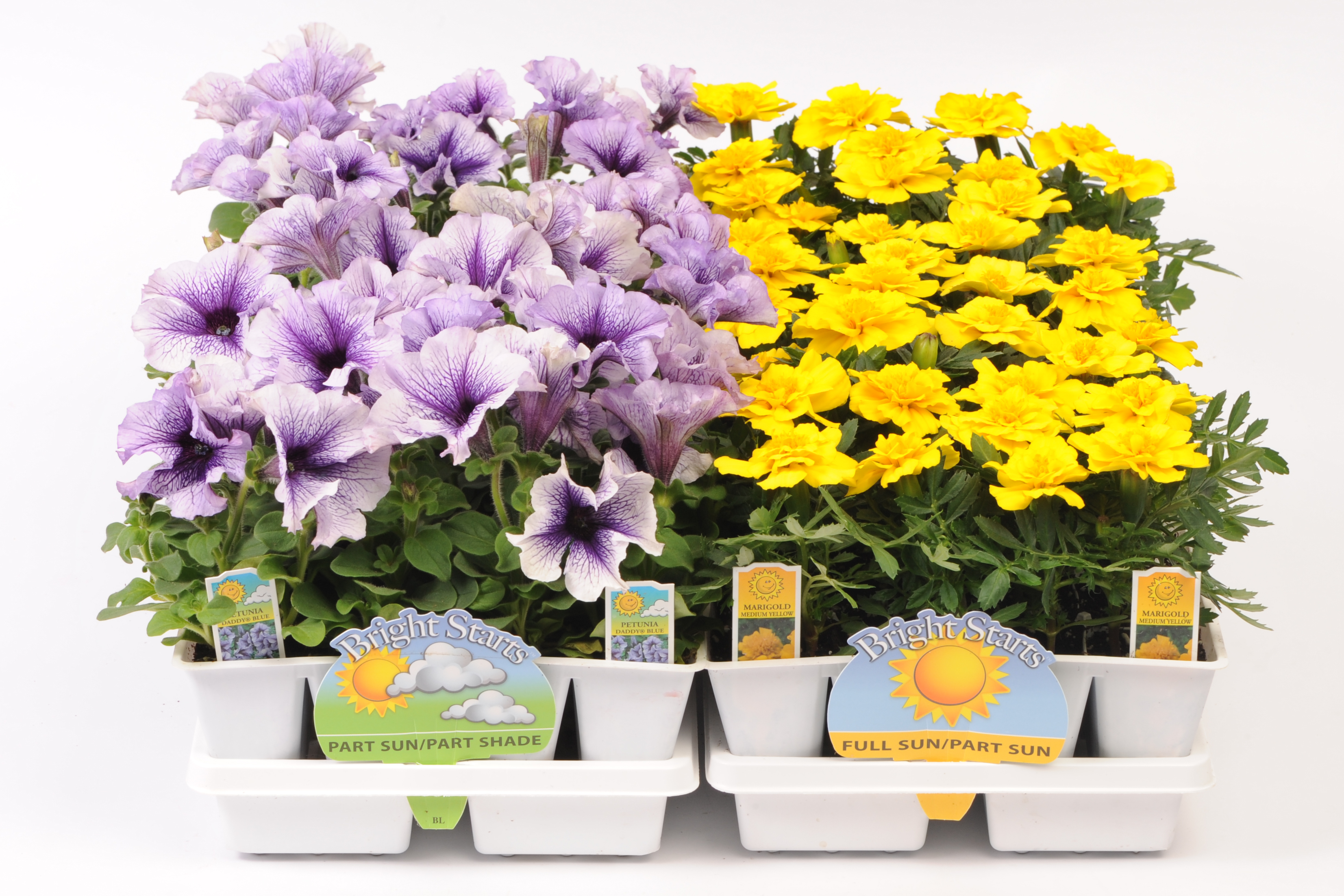 606 Jumbo Bedding Plants Wholesale Bedding Plants