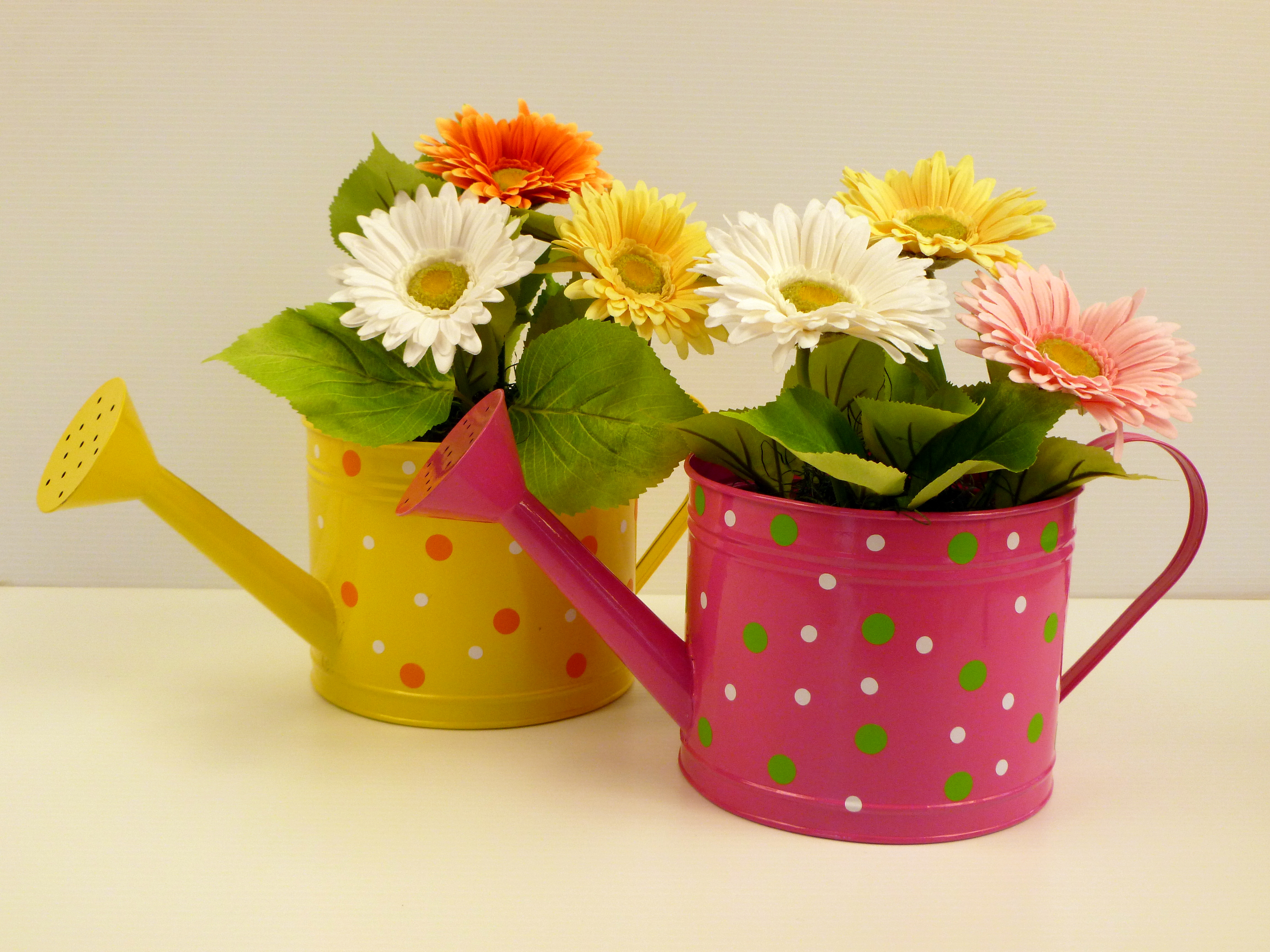 Polka Dot Watering Can Wholesale Bedding Plants Hybels